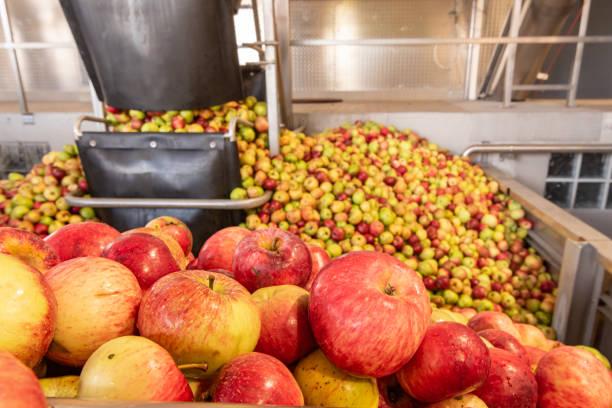 Apple Cider Vinegar Manufacturer